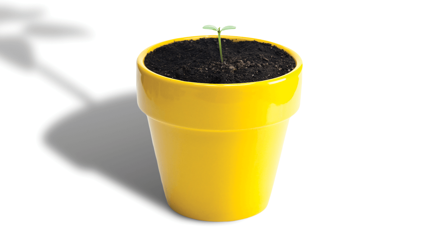 Small tree growing out of yellow pot